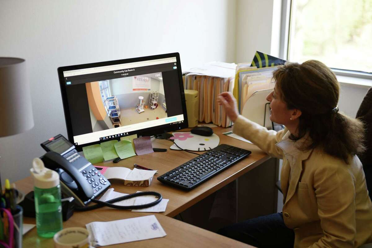 Maguerite Pearson, marketing and communications manager for the Mohawk Hudson Humane Society, views the shelter's Kitty Cam from her desktop computer on Tuesday, May 8, 2018, in Menands, N.Y. Several local businesses have donated products or services to the Mohawk Hudson Humane Society to help the organization become more tech-savvy and use tech to advance its mission. (Will Waldron/Times Union)