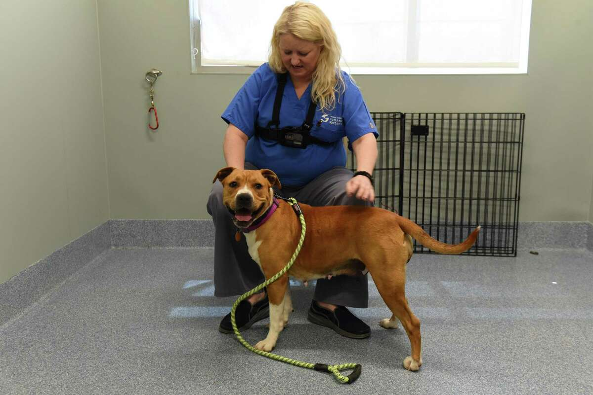 A GoPro video camera is used to record animal assessments at Mohawk Hudson Humane Society on Tuesday, May 8, 2018, in Menands, N.Y. Several local businesses have donated products or services to the Mohawk Hudson Humane Society to help the organization become more tech-savvy and use tech to advance its mission. (Will Waldron/Times Union)