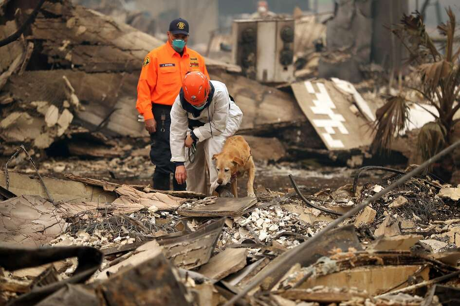 A search dog works on locating fire victims in the rubble of the Shelter Cove Apartments in aftermath of Camp Fire in Paradise, Calif. on Tuesday, November 13, 2018.