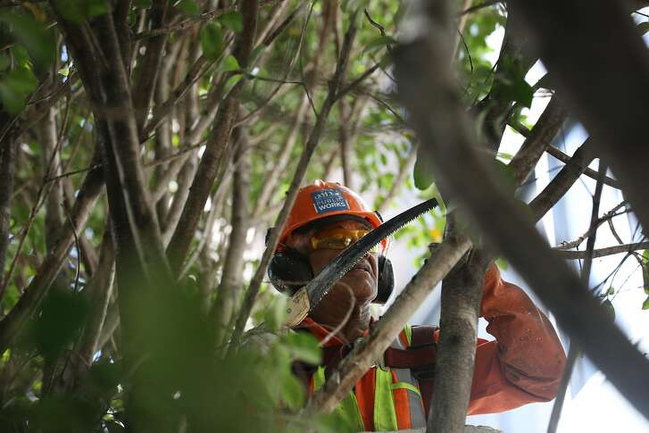 Sam Tupou, Department of Public Works arborist, hses a hand saw as he trims trees on Fillmore Street on Friday, September 7, 2018 in San Francisco, Calif.