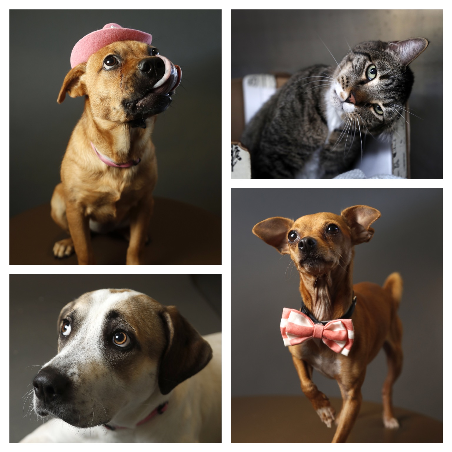 Pets of the Week: BARC