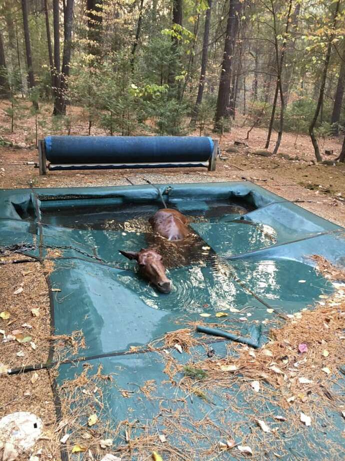Jeff Hill and Geoff Sheldon rescue a horse they found in a backyard pool in Paradise. The horse was stranded in the water for an unknown amount of time when Hill and Sheldon found it Sunday. Photo: Jeff Hill