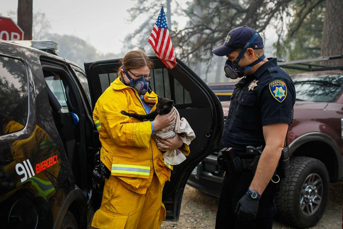 Officer Perry Walters brings an injured cat to officer Mollie St. John (left) during the Camp Fire in Paradise, California, on Wednesday, Nov. 14, 2018.