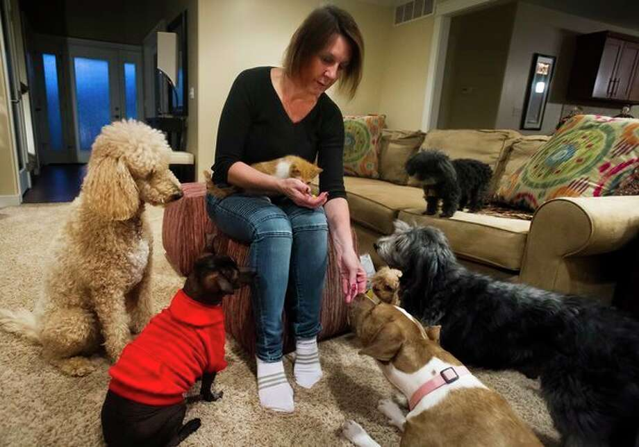 Gwen Malone, who owns Lil' Pear Tree in downtown Midland, gives treats to her six dogs and one foster kitten inside of her home on Wednesday in Midland. Malone plans to open a pet rescue facility to temporarily house dogs and cats on a 22-acre piece of property in Lee Township. (Katy Kildee/kkildee@mdn.net)