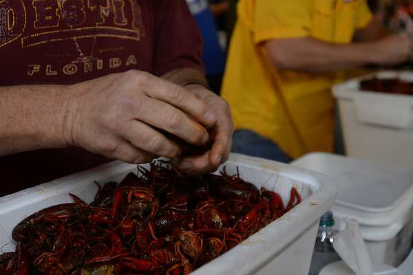 Contestants dig into their containers during the crawfish eating contest Friday night at Larry's French Market in Groves. Contestants had 15 minutes to prove their crawfish consumption worth, vying for the grand prize of a Bayou Classic Crawfish Pot and burner or Bayou Classic 25-quart Ice Chest. Photo taken Friday, April 29, 2016 Kim Brent/The Enterprise