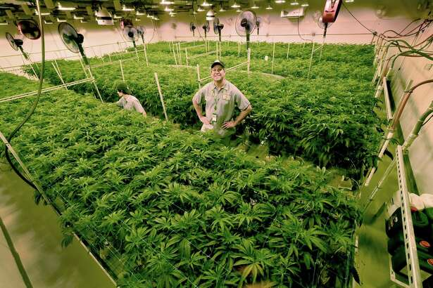 Advanced Grow Labs of West Haven, shown here in a file photo, is one of four medical-marijuana producers in Connecticut.