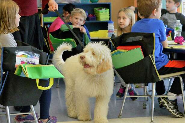 Bell Top Elementary School's new therapy dog, a Goldendoodle puppy named Auggie visits a first grade class Thursday Nov. 8, 2018 in North Greenbush, NY. (John Carl D'Annibale/Times Union)