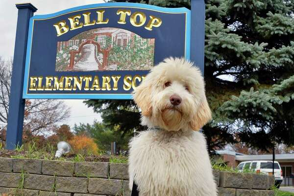 Bell Top Elementary School's new therapy dog, a Goldendoodle puppy named Auggie outside the school Thursday Nov. 8, 2018 in North Greenbush, NY. (John Carl D'Annibale/Times Union)