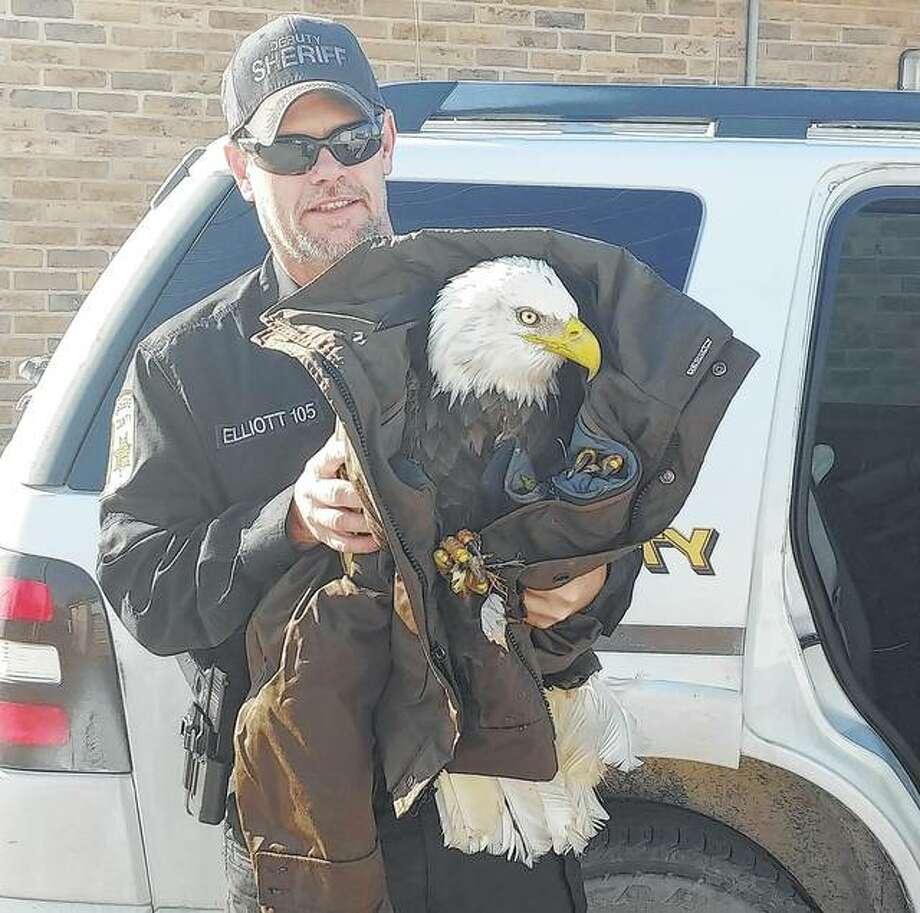Greene County Sheriff's Deputy Cliff Elliott captured a sick eagle last week. Photo: Photo Provided
