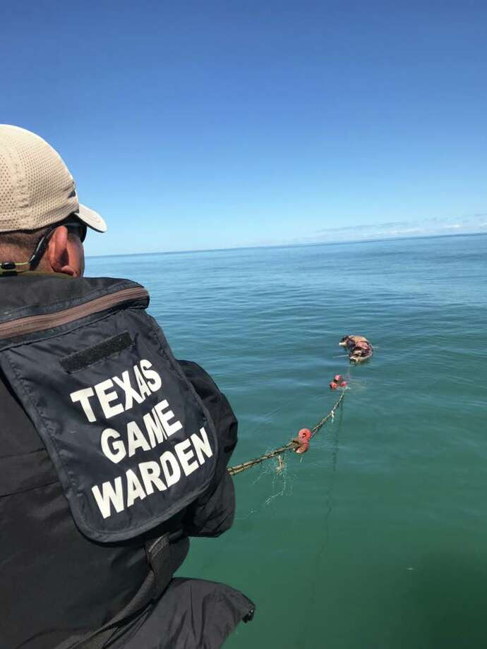 Texas game wardens found a dead dolphin, shark and numerous other fish in an illegal gill net near Boca Chica. Photo: Courtesy Of Texas Parks And Wildlife Department