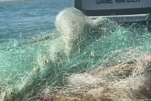 Texas game wardens found a dead dolphin, shark and numerous other fish in an illegal gill net near Boca Chica.