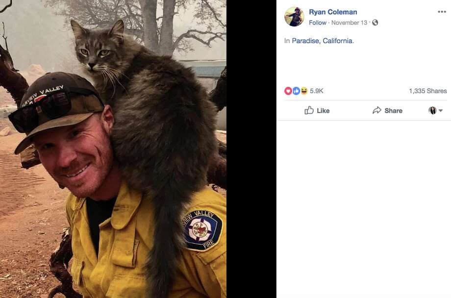 Firefighter Ryan Coleman found a cat near the Camp Fire in Paradise. She immediately took a liking to him, as evidenced by his photos. Photo: Ryan Coleman / Facebook Screenshot