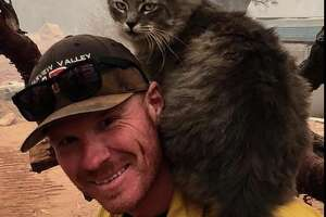 Firefighter Ryan Coleman found a cat near the Camp Fire in Paradise. She immediately took a liking to him, as evidenced by his photos.