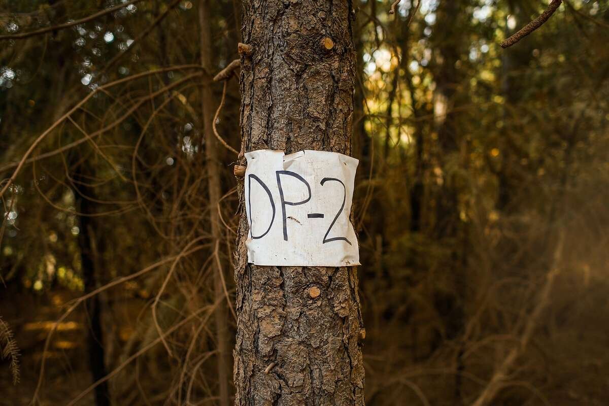 A drop point sign is seen on a tree where the fire would be placed in the burn unit off of Doe Mill Road in Forest Ranch, California, on Monday, Nov. 19, 2018. Surrounding trees had been cut down and a prescribed burn had been done to keep the area safe from wildfires.