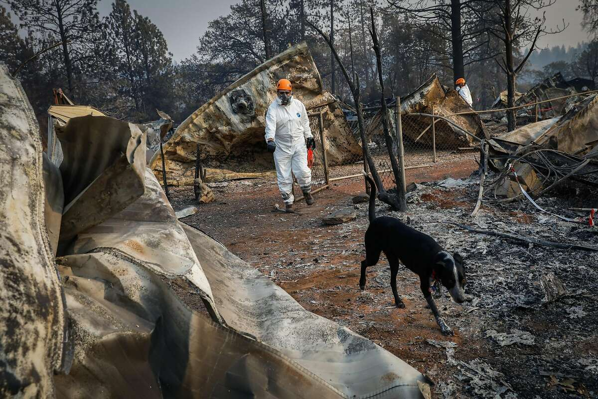 Search and Rescue crews, including a cadaver dog named Ricochet from Oregon look for remains off of Edgewood Lane after the Camp Fire destroyed the town of Paradise, California, on Monday, Nov. 19, 2018.