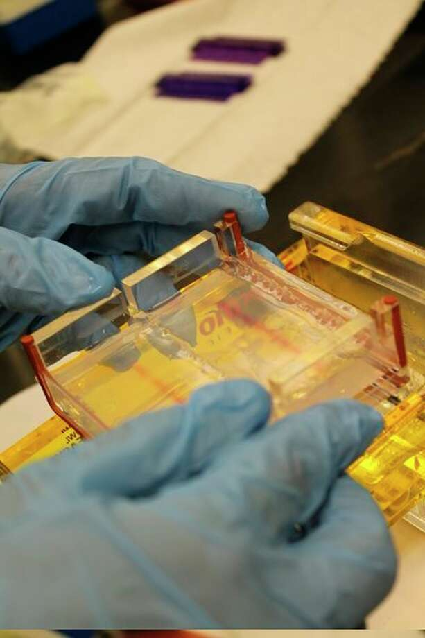 A DNA gel electrophoresis takes place, separating pieces of DNA by size. The tray holding this gel is part of the equipment that can be loaned out to teachers by MSU St. Andrews. (Photo provided)