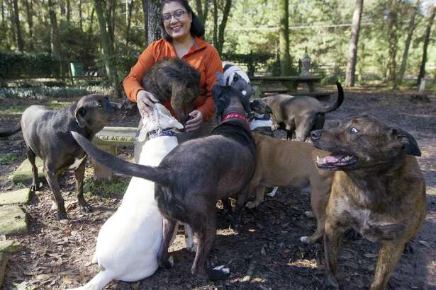 Priyanka Johri laughs as she is mobbed by several of her dogs at Pure Mutts Animal Sanctuary, Tuesday, Nov. 20, 2018, in Conroe. Johri and her husband Ravi help house older and special needs dogs in part through profits from her business, Woodlands Eco Realty.