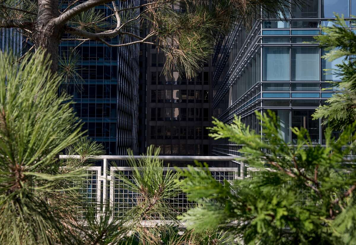 Tall office buildings are seen through various pine and redwood trees planted inside the Transbay Transit Center Park in San Francisco, Calif. Tuesday, Nov. 20, 2018.