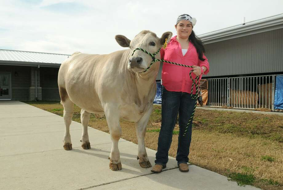 Tomball city council approved an ordinance to allow Tomball ISD to build an ag barn at Tomball High School. Cheyanne Foster walks her steer at Tomball Memorial High School. Photo: Jerry Baker, Freelance / For The Chronicle