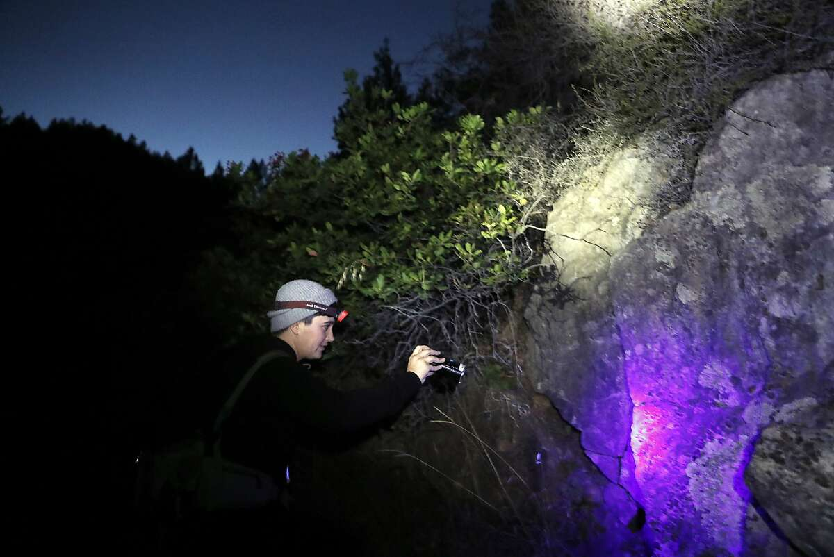 California Academy of Sciences' arachnologist Lauren Esposito looks for pacific forest scorpions on Mt. Tamalpais in Mill Valley, Calif.. on Monday, November 5, 2018.