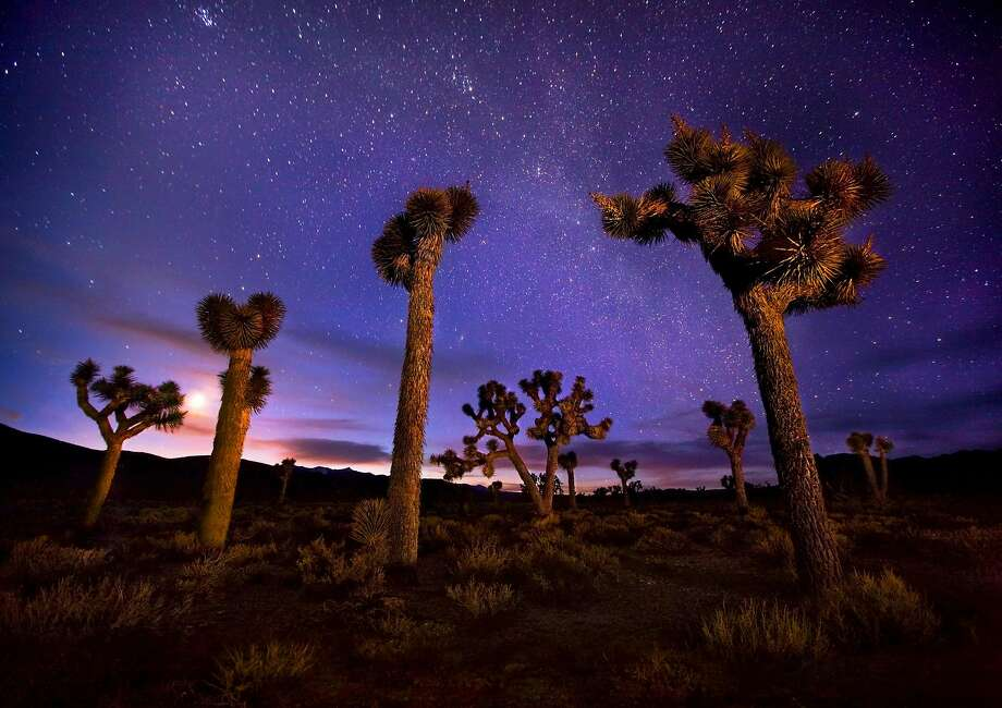 Joshua trees photographed under the Milky Way, the moon and a twilight glow in Death Valley. Photo: Marc Adamus / Getty Images / Aurora Creative