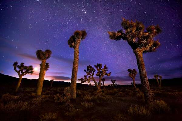 Joshua Trees photographed under the Milky Way, the moon and a twilight glow in Death Valley.