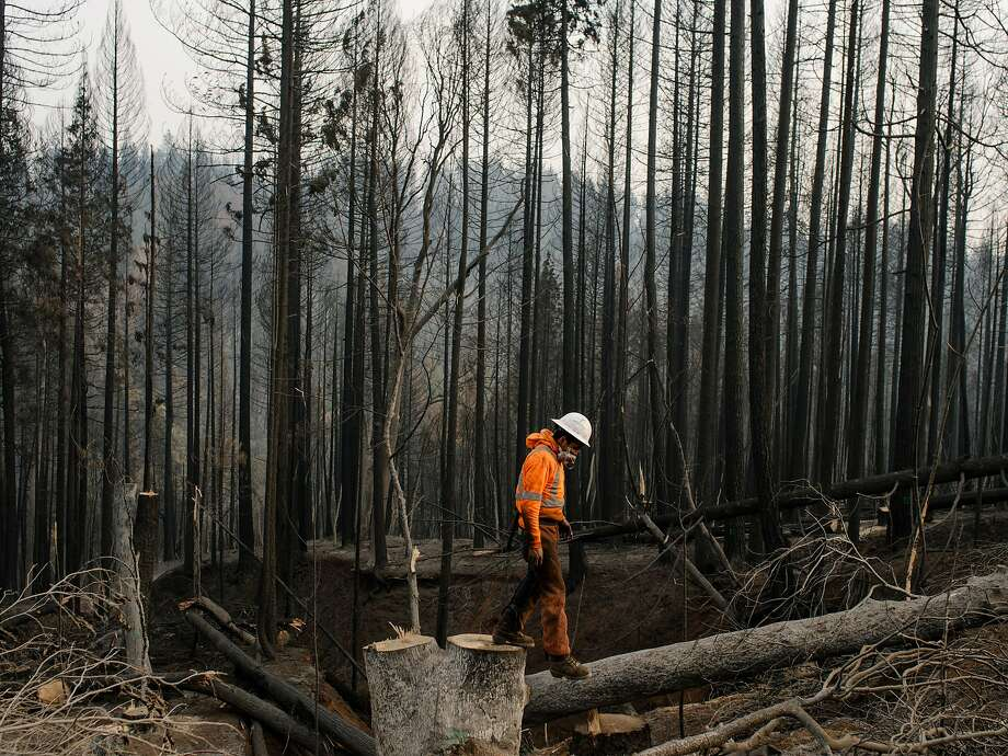 An Arbor Works crew member clears trees in the aftermath of the Camp Fire in Magalia, Calif., Nov. 20, 2018. Friday's government report, detailing in stark terms the economic cost of climate change, is likely to be played down by the administration, even as opponents use it to attack President Donald Trump's policies. (Jason Henry/The New York Times) Photo: JASON HENRY, NYT