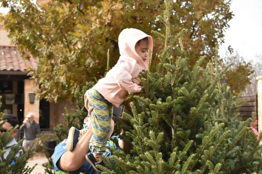 Parks Legado Christmas Tree Market opened for its first season over the weekend. Photo: Lauren Eckert