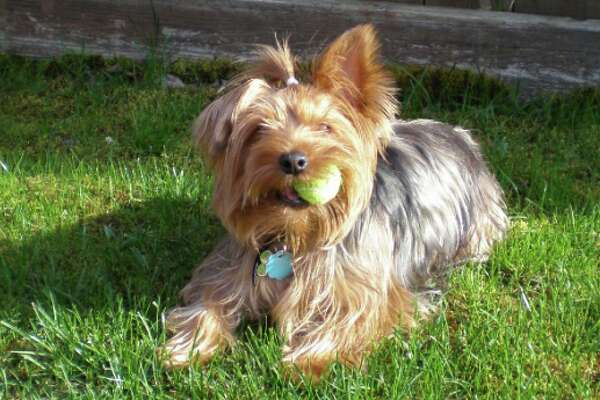 Pets remembered: Pennylane Perry