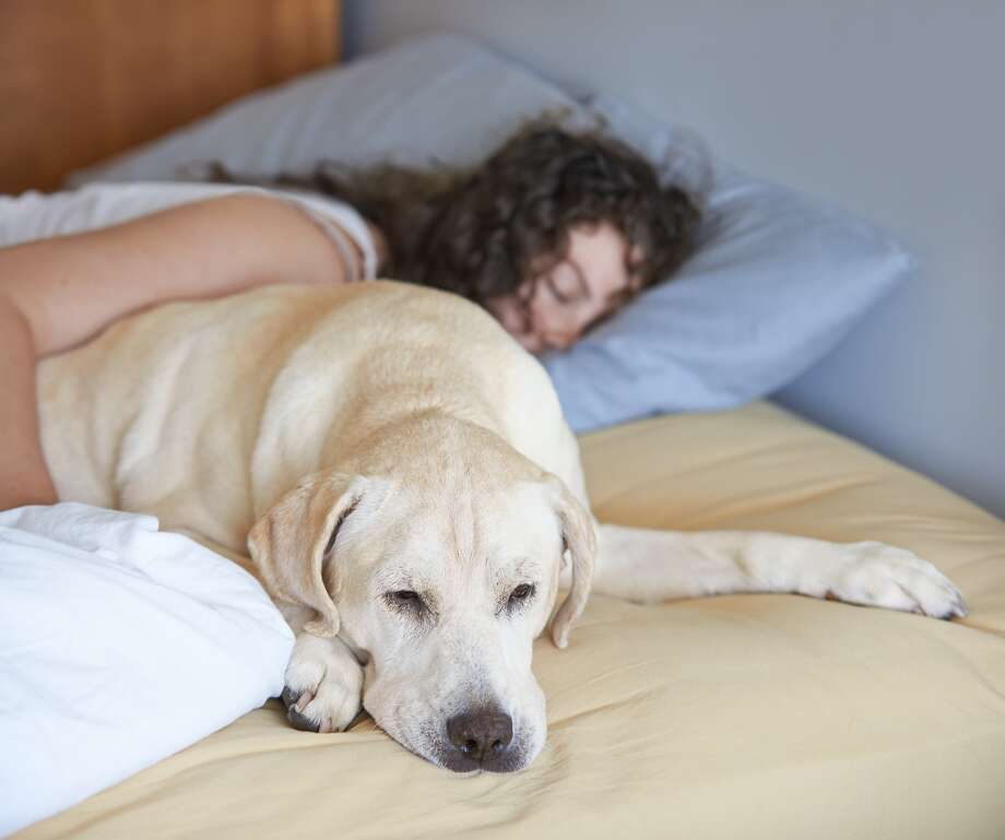 Sleeping with their dog gave women participating in a recent Canisus College study stronger feelings of comfort and security. Photo:                                /Getty Images/iStockphoto /