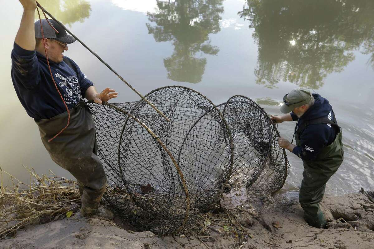 Eric Munscher, left, director of Turtle Survival Alliance-North American Freshwater Turtle Research Group, and Arron Tuggle, right, a research assistant, retrieve an alligator snapping turtle the group trapped in Buffalo Bayou as part of the process of tagging turtles Saturday, Nov. 24, 2018. The male turtle was approximately 20-years-old and weighed around 40 pounds.