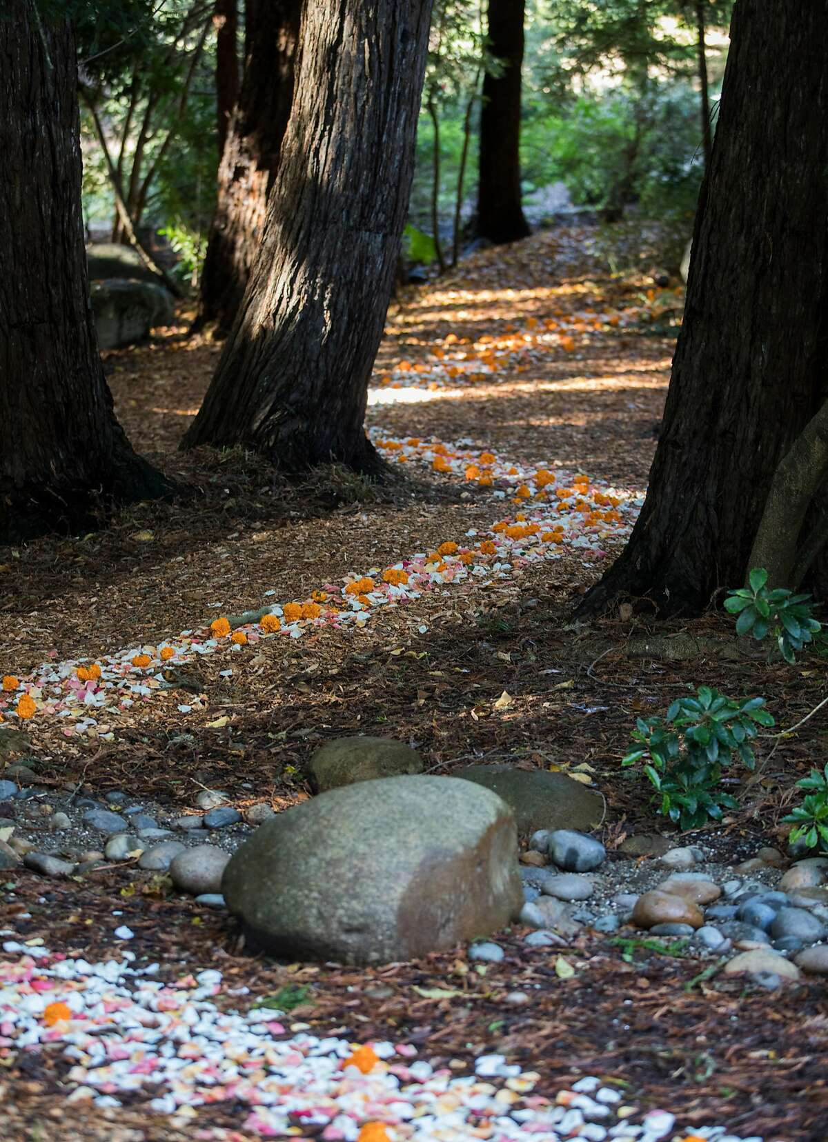 A trail of flower petals leads into the National Aids Memorial Grove at Golden Gate Park in San Francisco, Calif. Saturday, Dec. 1, 2018 during an observance of World Aids Day.