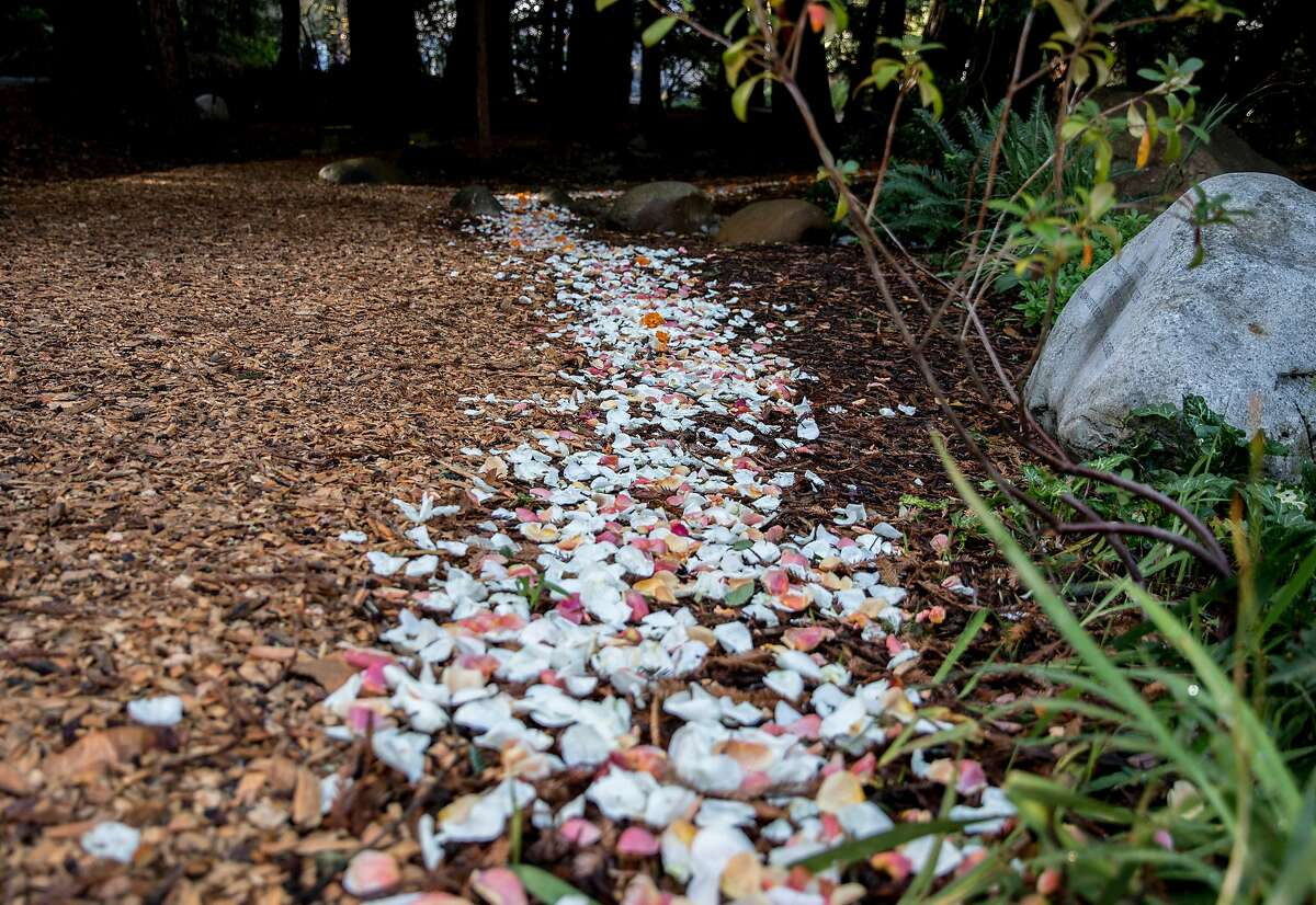 A trail of flower petals leads to the National Aids Memorial Grove at Golden Gate Park in San Francisco, Calif. Saturday, Dec. 1, 2018 during an observance of World Aids Day.