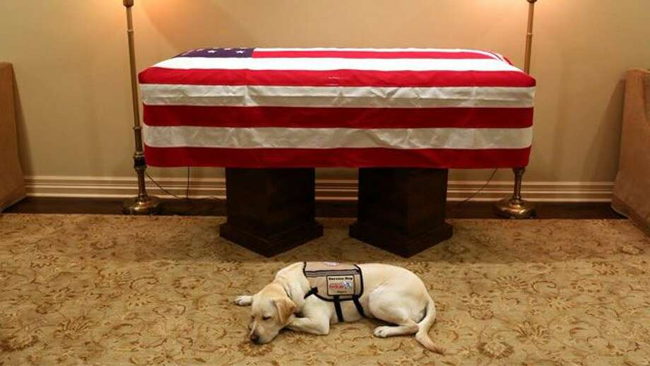 Sully Bushs Service Dog Lies By His Casket Before One Last
