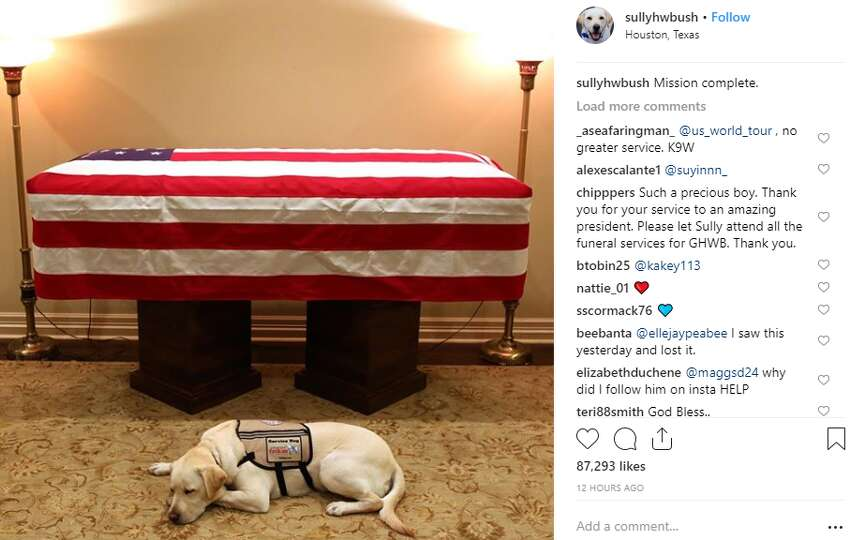 PHOTOS: George H.W. Bush and his service dog Sully George H.W. Bush's service dog Sully lays by his late owner's casket on Sunday. The dog will go on to help other wounded soldiers in Washington D.C. >>> See more memories from their time together, chronicled through Sully's Instagram