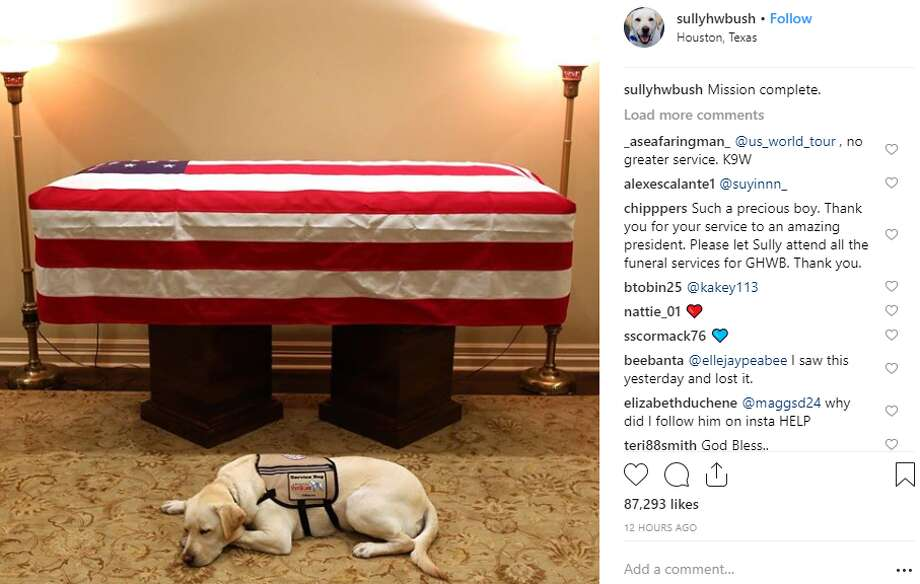 George H.W. Bush's service dog Sully lays by his late owner's casket on Sunday. The dog will go on to help other wounded soldiers in Washington D.C. Photo: Instagram