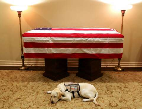 This Emotional George H W Bush Cartoon Went Viral Touching Even