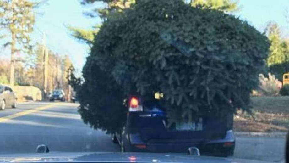 According to AAA Northeast, improperly secured Christmas trees can become holiday roadway hazards if they fall from vehicles while on the move. Photo: Contributed /AAA Northeast