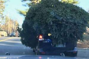 According to AAA Northeast, improperly secured Christmas trees can become holiday roadway hazards if they fall from vehicles while on the move.