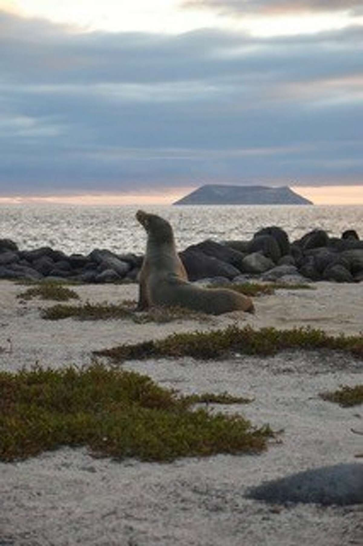 Stephen Pratt, Niskayuna: This photo of a sea lion posing on the shore of North Seymour in the Galapagos Islands, Ecuador, was taken in August.