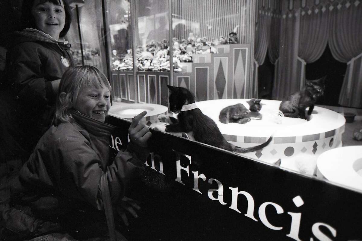 Bob Mahoney, expert window dresser, as he is working on Gump's Christmas window display included dogs and cats from the SPCA November 27, 1987