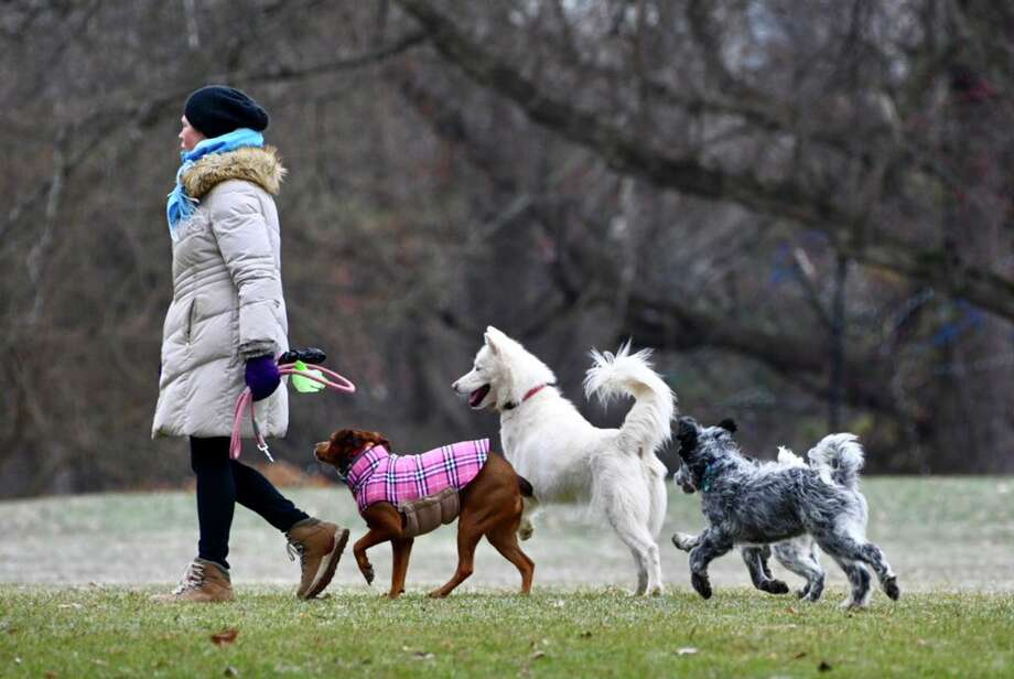 Dogs enjoy a group romp in Washington Park in Albany, NY, on Thursday, Dec. 6, 2018. (Skip Dickstein/Times Union) Photo: Skip Dickstein/Times Union