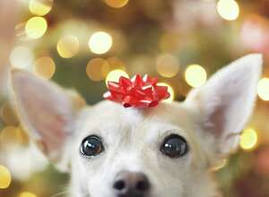 Increasingly, pets are becoming part of the family and that means Americans are spending more on them for Christmas.