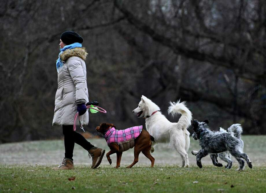 A dog lover takes her crew for a romp in Washington Park for some exercise Thursday Dec. 6, 2018 in Albany, N.Y.  (Skip Dickstein/Times Union) Photo: SKIP DICKSTEIN, Albany Times Union