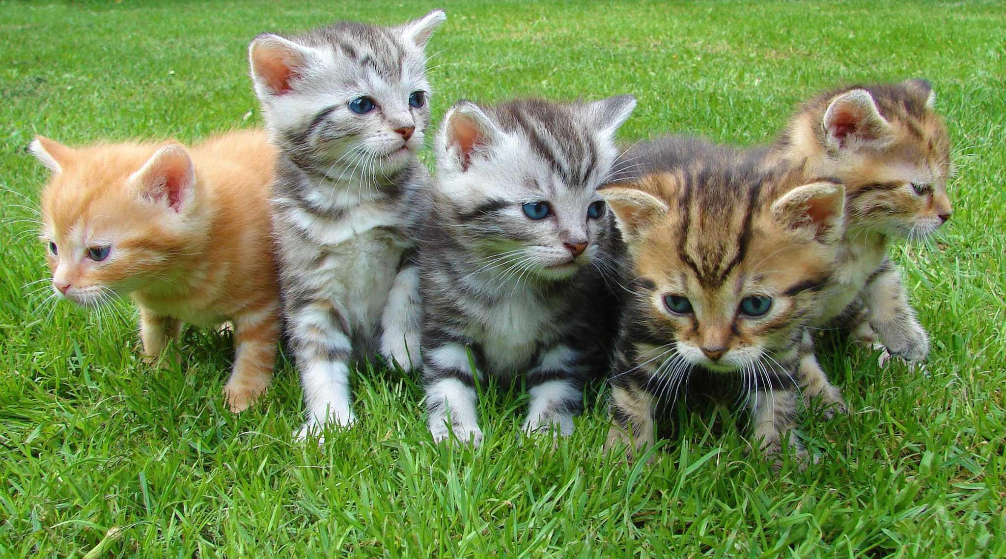 PET TALK: Choosing the best diet for your kitten