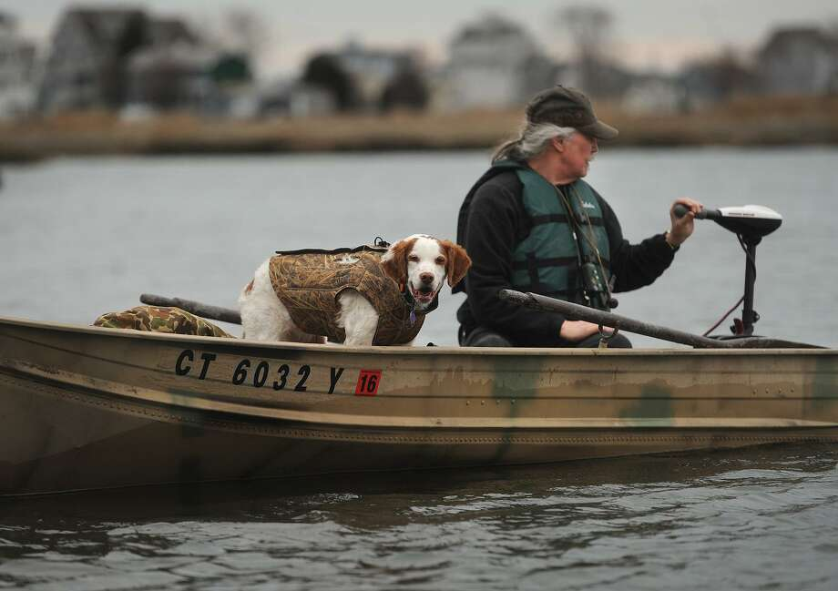 A hunter and his Brittany spaniel head out for an afternoon of Canada goose hunting on the Housatonic Marsh in Milford, Conn. in February of 2016. Photo: Brian A. Pounds / Hearst Connecticut Media / Connecticut Post