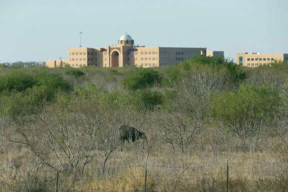 A cow stands in the foreground on land owned by Verano Land Group Land on San Antonio's South Side. Verano acquired the land about 12 years ago to build a mixed-use development surrounding the Texas A&M University-San Antonio — shown in the background. Verano is once again trying to sell the land.