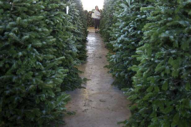 Rina O'Malley browses through the Christmas Trees at National Tree & Shrub, Monday, Dec. 3, 2018 in Houston. The nursery on Yale Street procures their Christmas trees from Oregon and offers several services including flocking and home delivery.