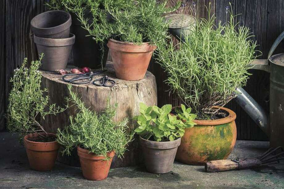 Pots are a great way to grow herbs, either inside or out. Just remember that soil and watering requirements for herbs in pots are different than those in the ground. Rosemary, oregano and mint do extraordinarily well in pots, although oregano and mint do not do well in cold weather.