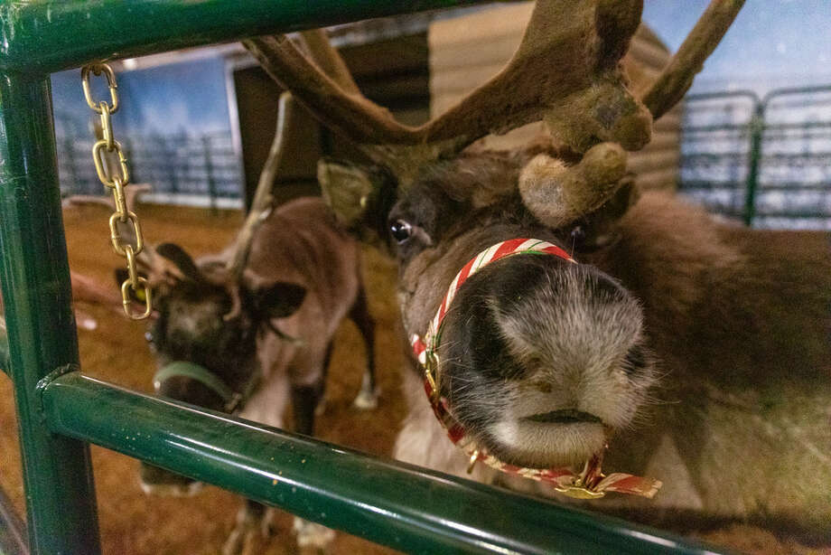 The West Texas North Pole Village opened Friday night with reindeer and a sledding hill. The event will run Friday-Sunday until Dec. 23 at the Ector County Coliseum. Admission is $25 plus tax for adults and free for children 12 and under. More details about the event will be featured in an upcoming 191 News edition.11/29/2018 Jacy Lewis/191 News Photo: Jacy Lewis/191 News